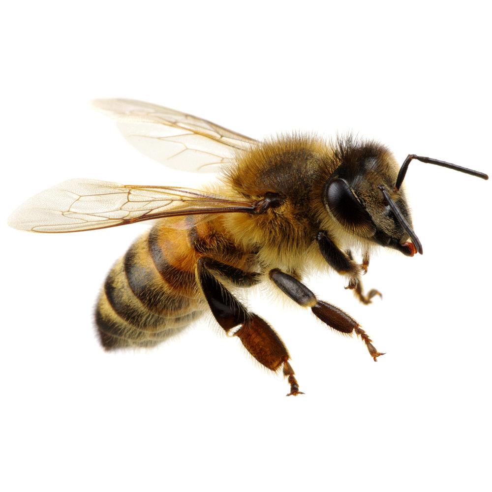 swarming-bee-1100.jpg
