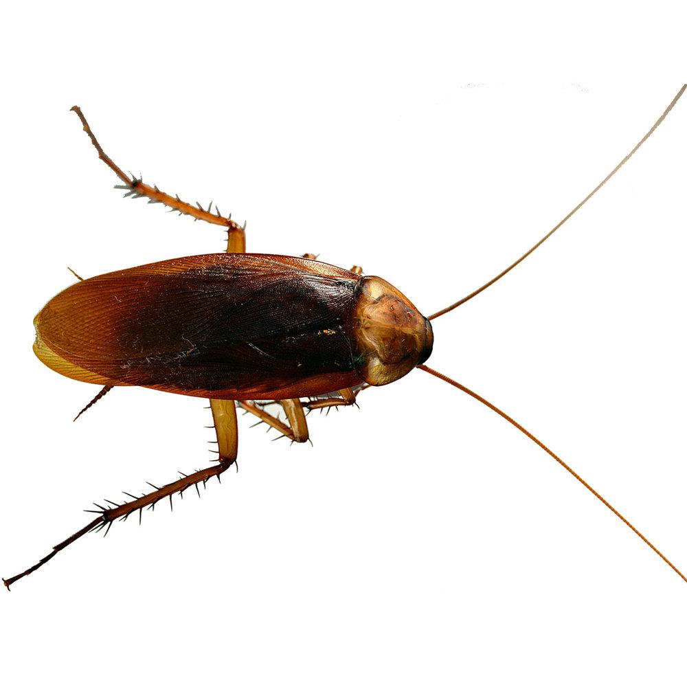 cockroach-infestation1100.jpg