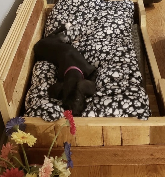 """- """"It's hard finding a bed for a great dane. Was planning on buying beds as she began to grow and did the math. Would've bought so many beds as she grew but instead Kim told me about her beds she makes and it was custom made for my dog for her to grow into. Thank you very much we are more than pleased with the end results.""""-DONALD"""