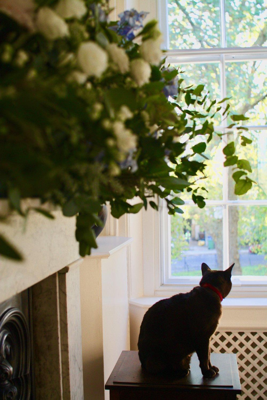 Profile cat 2.jpg