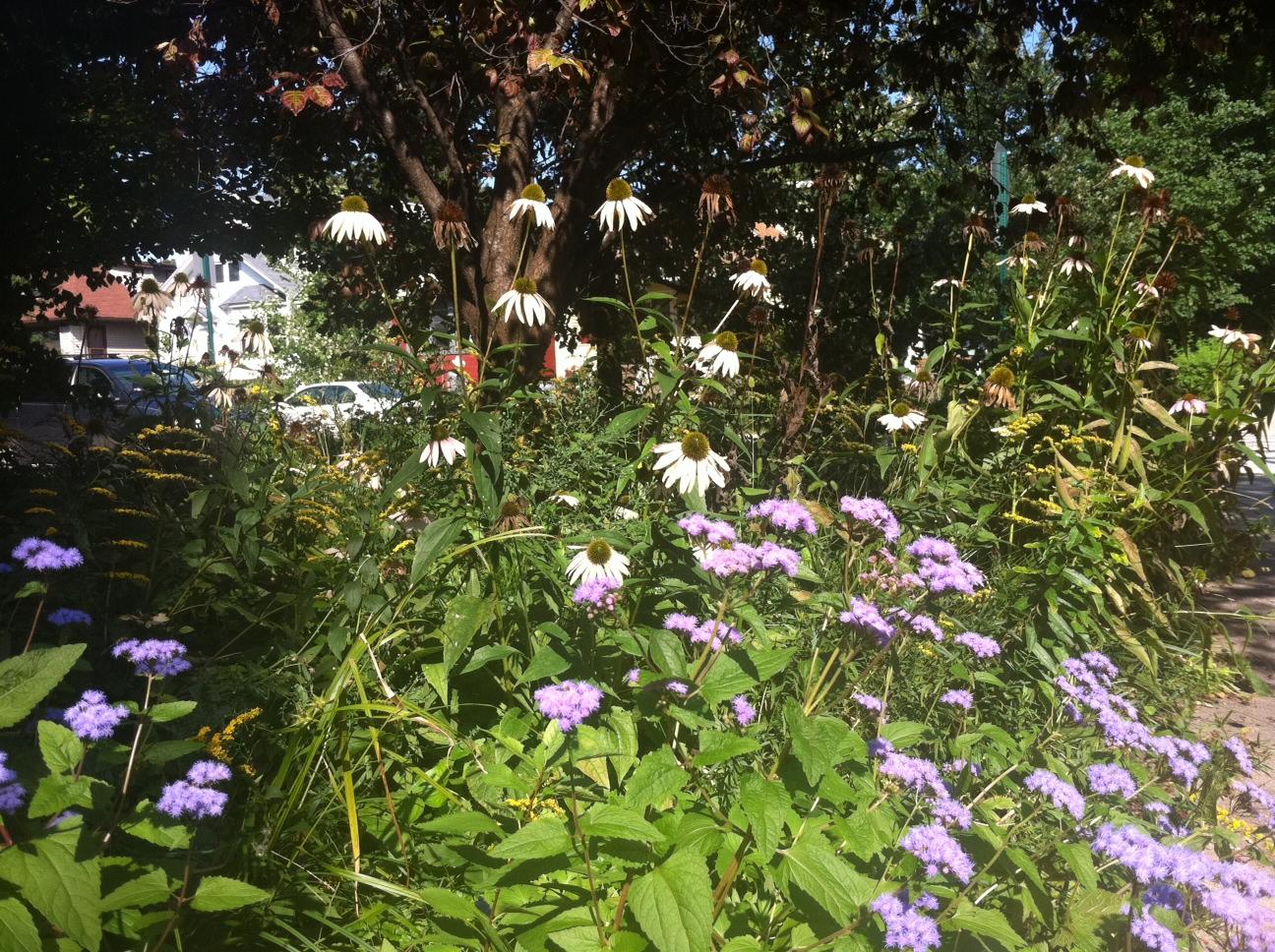 DChien Purple Flowers