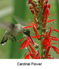Redflowerbird