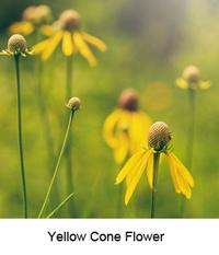 Yellowcone1