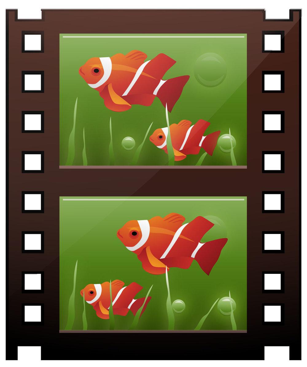 fishfilm2
