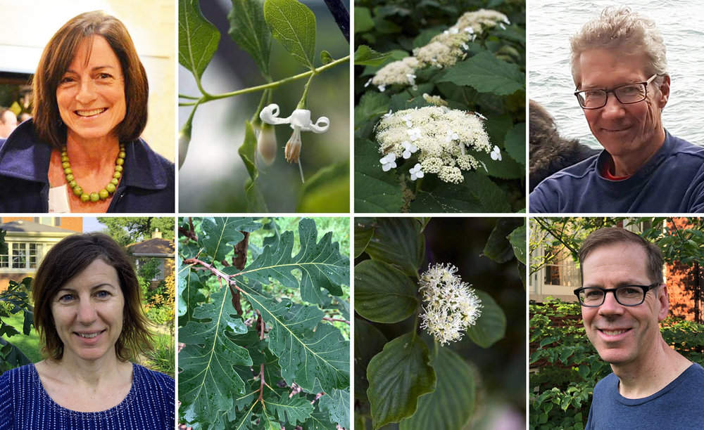 Grid of four people with a close up of their favorite native shrub or tree.