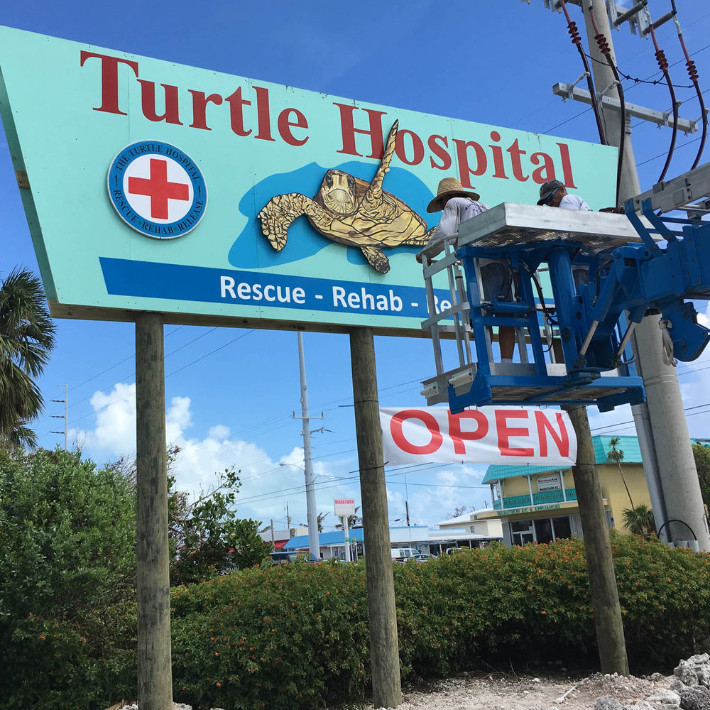 Workers repaired The Turtle Hospital Sign, which had fallen to the ground during Hurricane Irma.