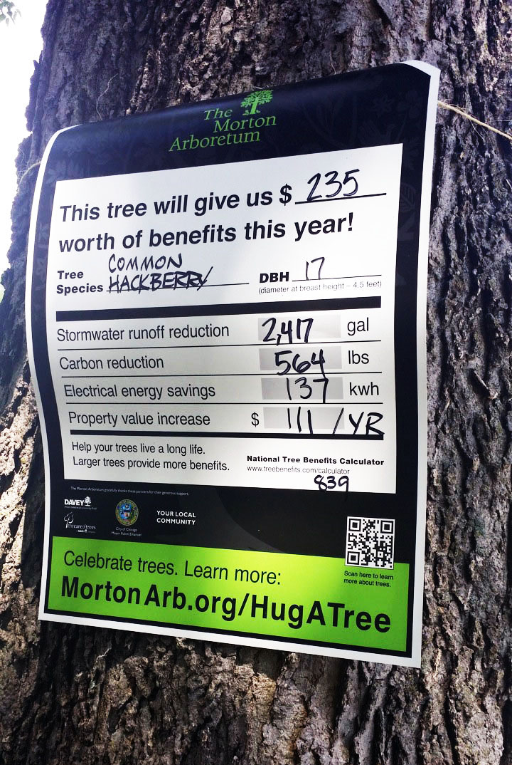 Tree tag for a common hackberry tree.