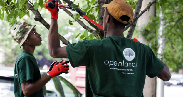 Openlands trains people to maintain trees.