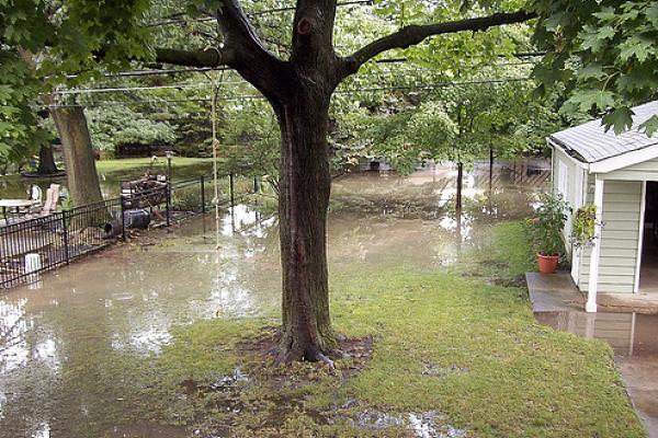 A flooded yard.