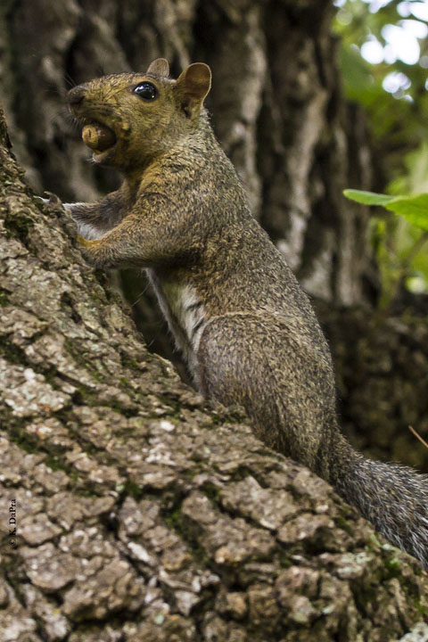 Photo by Kris DaPra from the Cook County Forest Preserves.