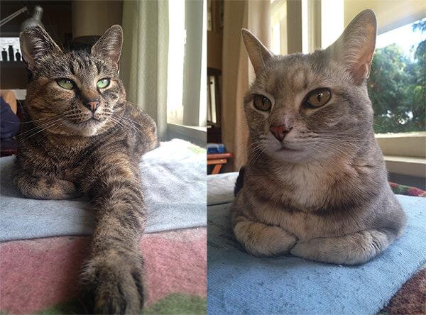 Jeanette-Zeis-cats.jpg