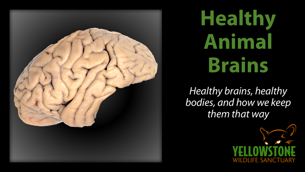Goes well with: An Enriching Opportunity.   A healthy brain is just as important to us as a healthy body, and the same is true of animals. In this class, we talk about current research, lifetime learning, behavioral enrichment, aerobic exercise, socialization, and more.