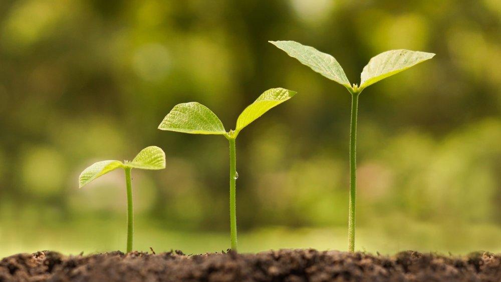 pianta che cresce.jpg
