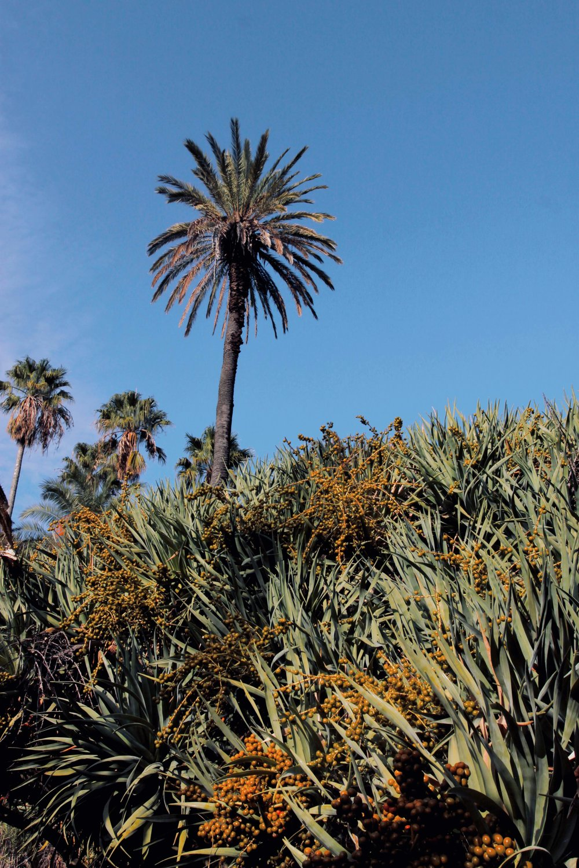 Lisbon gardens cactus.jpg
