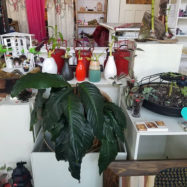 Come by the DCBC to check out Crescent Shine, the artist and makers consignment shop that calls DCBC home! Very affordable plants, bath products, jewelry, art, and so much more! Open Monday-Saturday 11am-5pm.