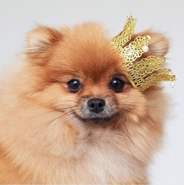 """I am queen."" . @chromosomedog ~ #lovehersalon #olaplex #balayage #melbournesalon #melbournehairsalon #melbournehairdresser #melbournehairdressers #colorcorrection #hairmakeover"