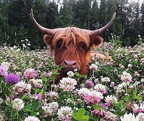 🐮🌸TAURUS SEASON🌸🐮  As of April 20th, we've become cemented into Taurus Season, the first fixed sign of the zodiac, and the first earth sign. Taurus is connected to terra, the physical land beneath us, pachamama, Earth. Taurus season brings us the slow, steady, nursing and fertile energy of springtime (in the northern hemisphere), when the plants of the earth to blossom which allows bees to do their pollination magic, giving animals nourishment to feed and reproduce. Taurus is ruled by Venus, and in this earthly manifestation, Venus shows us the beauty and value of earthly materials. The beauty inherent in flowers, the symmetry and patterns, the cyclical and balanced nature of Mother Earth can be attributed to Venus's influence upon us.  Venus also rules pleasure, and in Taurus season we're invited to experience the pleasures and beauty of nature. Flowers bloom asking us to slow down and take a whiff. Birds are singing songs and rains are pouring to provide nourishment for lush, green grasses and plant life. We're blessed enough to experience these earthly pleasures, and it's up to us to show appreciation for them.  Some say Taurus's are stubborn, lazy and eat all day. This isn't really the case. Taurus simply makes calculated moves as to conserve & exert their energy on an as-needed basis. Taurus is smart about their resources. They will not act unless they want to, & the rest of us will just have to deal with it! Taurus is intimately connected to money & items of value, as its rulership by Venus shows the importance of acquiring items that are long-lasting. This gives Taurus' amazing taste in Venusian things - food, music, clothes, etc. A Taurus knows what's worth the money & what isn't. They're mightily resourceful!   Don't forget to wish the Taurus' in your life a happy Taurus season! Let them know how much you appreciate their impeccable taste, the sense of safety and security they provide, and their steady, comforting nature.   Tag your favorite Taurus and let 