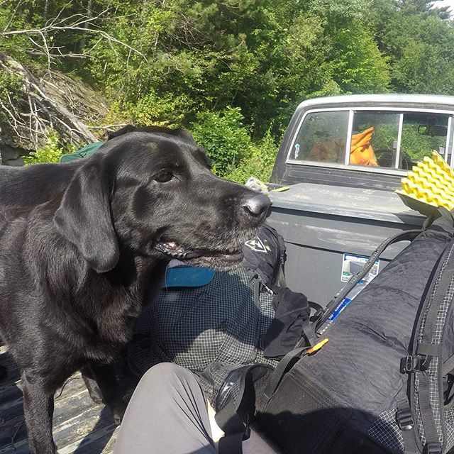 Hitchhiking buddy. Back of a pickup with two dogs, now that's a ride 🤙🚘 . . . . . #family #goodtime #hitchhiking #dog #dogsofinstagram #dogs #pickup #truck #hiker #hikers #hyperlite #vermont