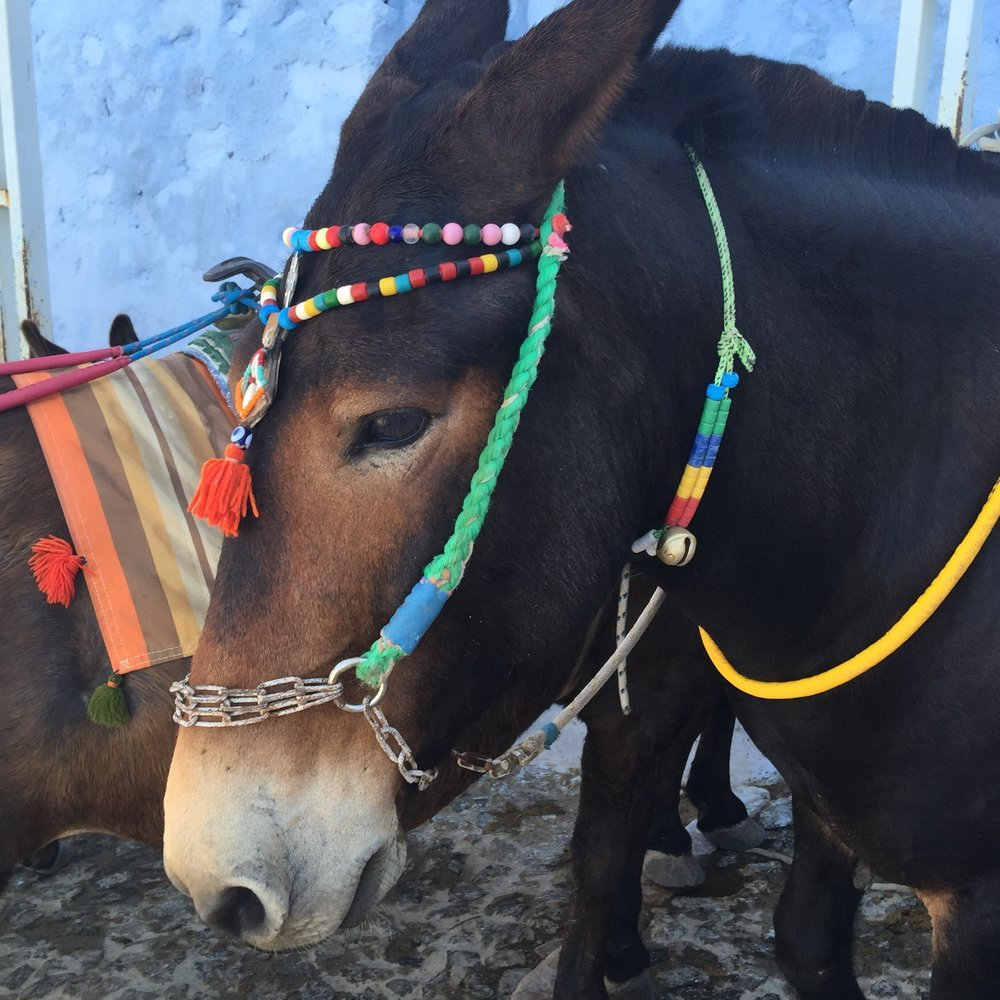 Please do not ride the donkeys of Santorini. As you can see how heavily rusted the chains go in there mouth. They are all abused and treated poorly on a daily basis, by their owners and by tourist.