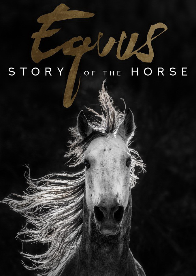 Equus - Story of the Horse - Official Image