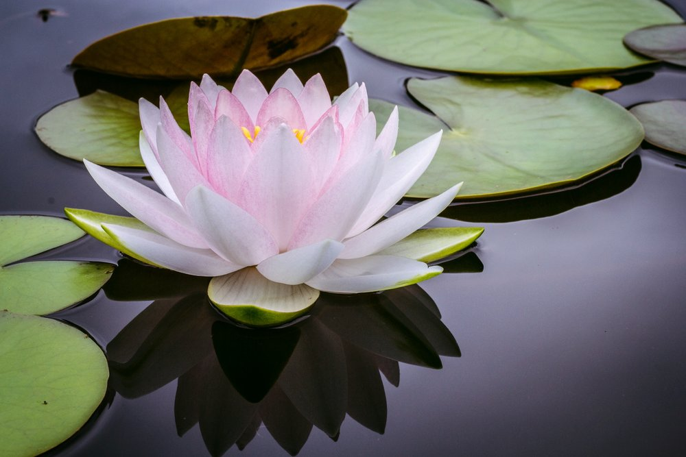 Using-Crystal-Balls-for-Beginners-Calming-your-home-by-peaceful-island-com-lotus-flower