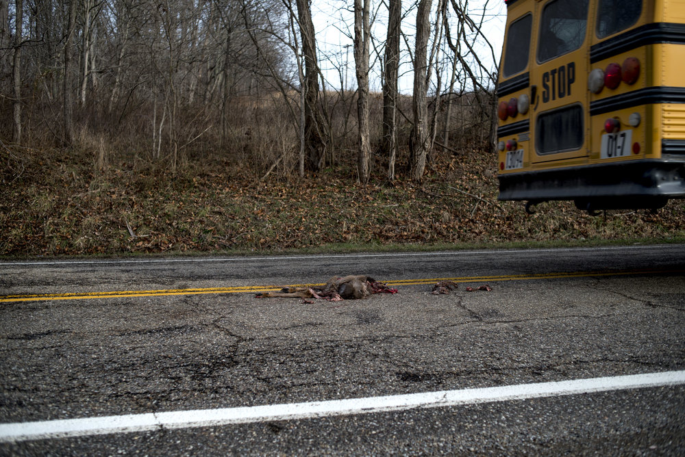 A school bus headed to Shade passes a deer roadkill one afternoon. Living in rural areas, roadkill is a common occurrence.