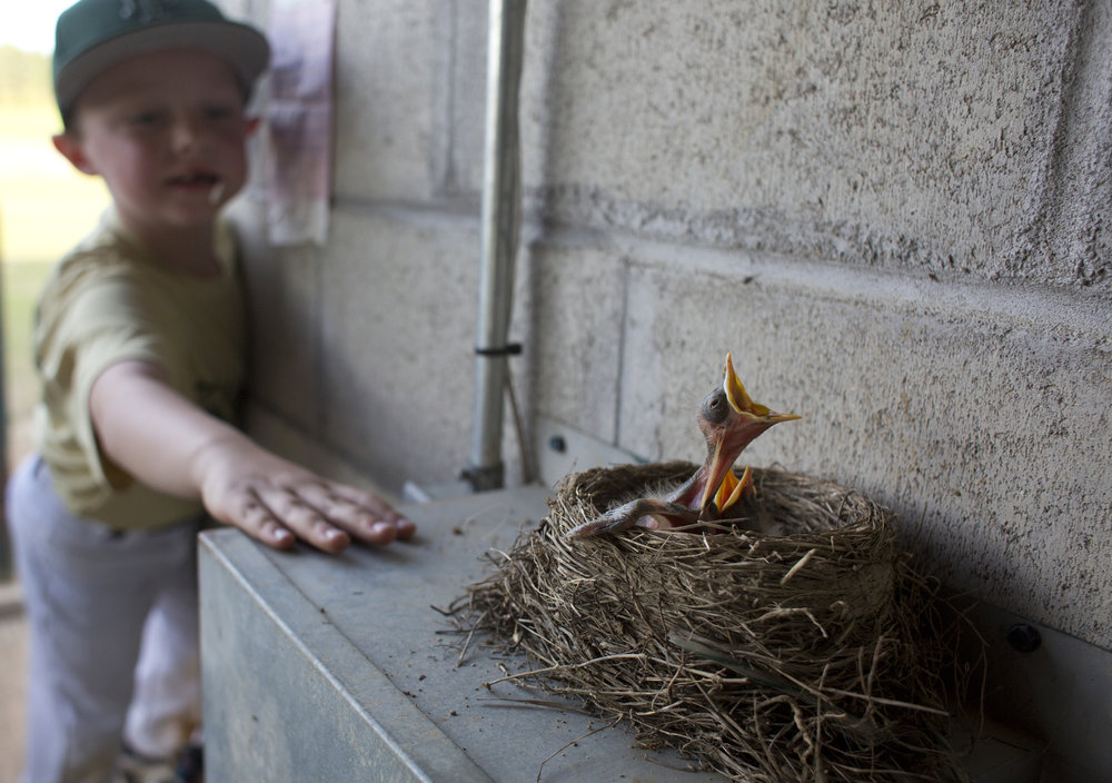"""Koby Greulich of Ferdinand, 6, tapped on the electrical box holding a birds nest with two baby birds in the Forest Park dugout in Ferdinand, Ind. on May 1, 2018. Greulich said the dugout's spring residents are """"so cool."""""""