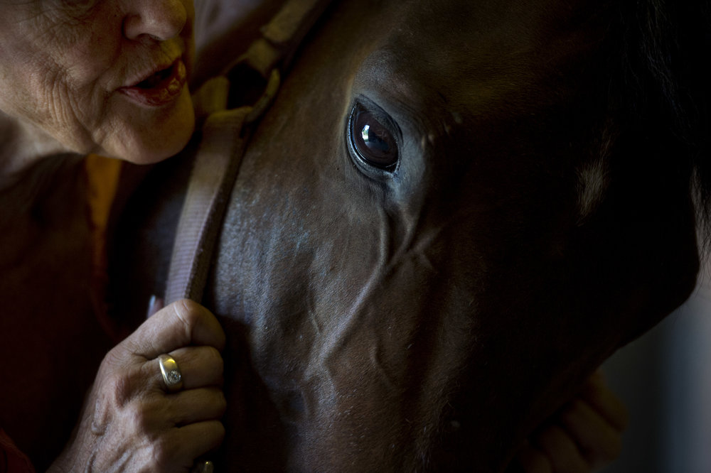 "Jean Duckworth talks to her horse Tom, that survived the Ellis Park Tornado in 2005, at Double M Stables in Evansville, Ind., on Thursday, Aug. 31, 2017. After taking Tom in when the original owners weren't identified, Duckworth treated Tom's trauma from the tornado with aromatherapy oils every day for six months. As a result of the aromatherapy, she says that he ""became a different horse."""