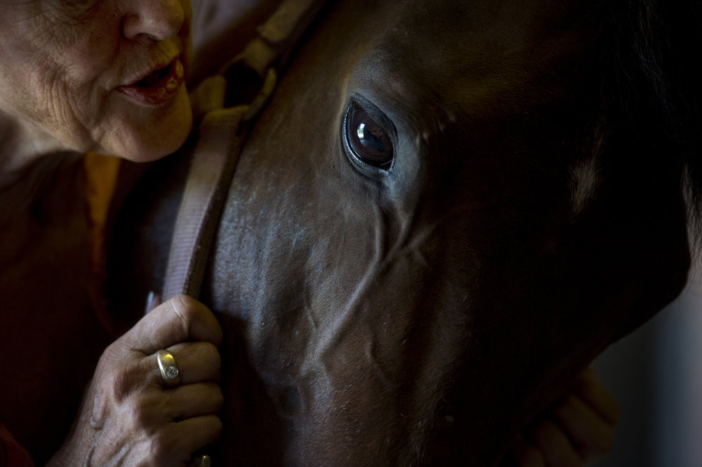 "Jean Duckworth talked to her horse Tom, that survived the Ellis Park Tornado in 2005, at Double M Stables in Evansville, Ind., on Thursday, Aug. 31, 2017. After taking Tom in when the original owners weren't identified, Duckworth treated Tom's trauma from the tornado with aromatherapy oils every day for six months. As a result of the aromatherapy, she says that he ""became a different horse."""