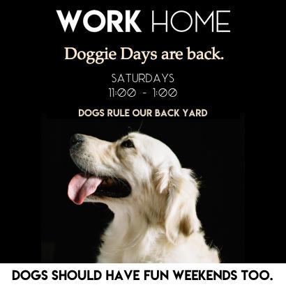 doggie-days-at-work-home