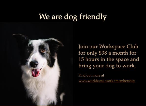Dog Friendly Work Office