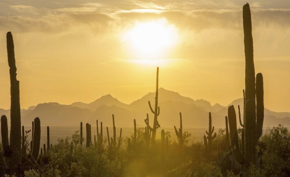 tucson-desert-soul.jpg