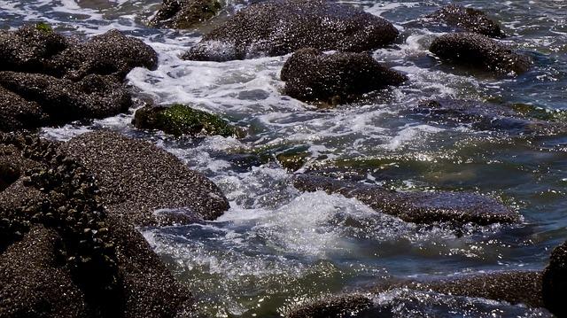 www.maxpixel.net-Ventura-Mollusks-Tide-Pool-Ocean-Pacific-Ocean-2553645.jpg
