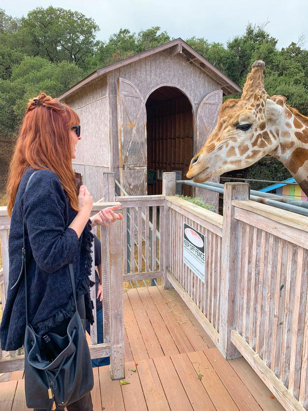 Malibu Wine Safari - Stanley the Giraffe - Wine Tasting