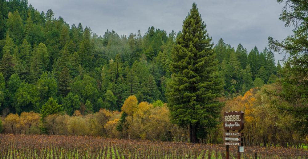 Korbel Wine Tasting in Sonoma