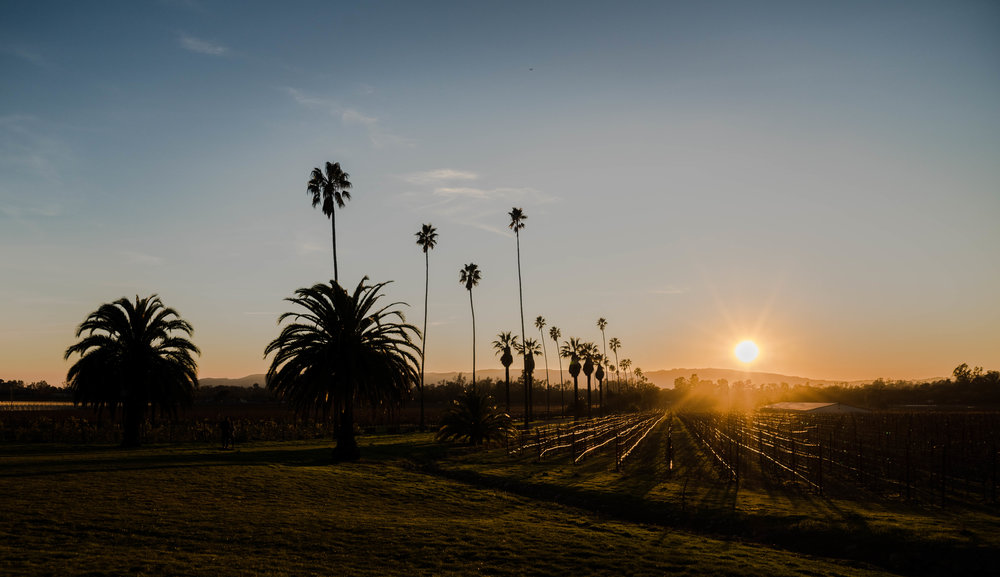 Scribe Winery Napa Sonoma