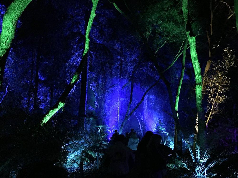 Descanso Gardens: Enchanted Forest of Light Fairy Garden