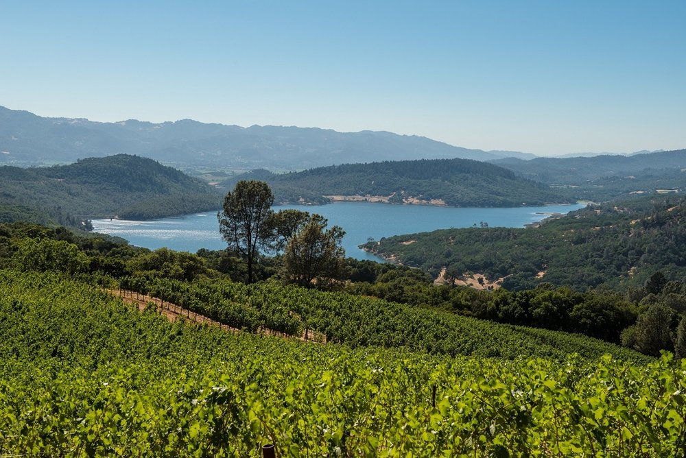 Chappellet - Close Up of Vineyard and Lake - Bob McClenahan photography