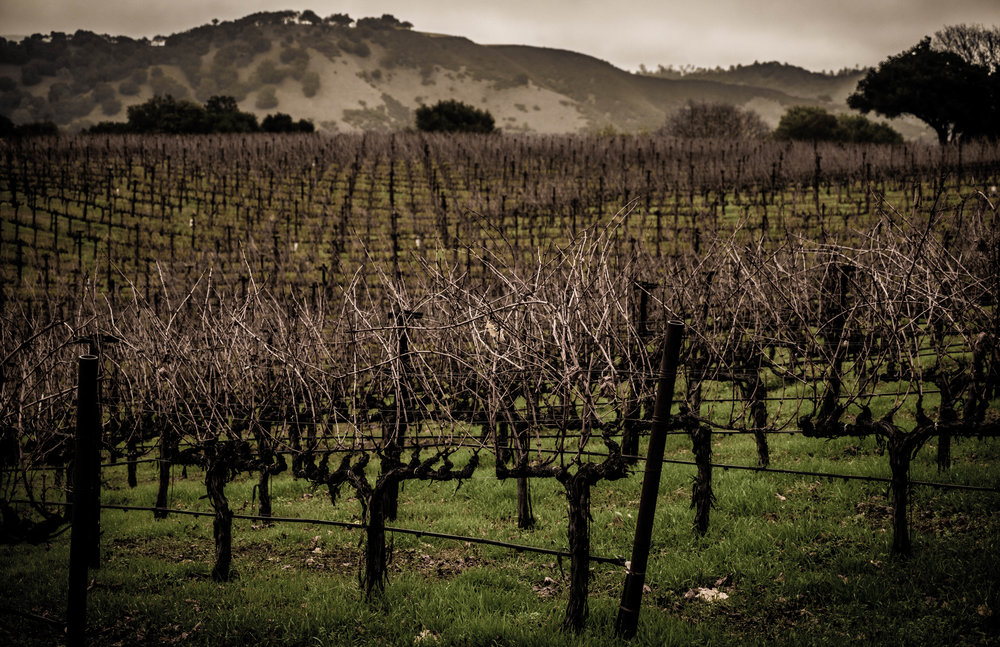 Napa2018_Moody Vineyard Rain Picture