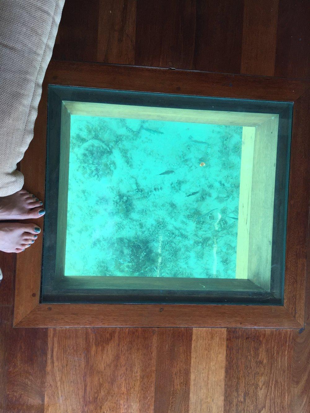 Fish_under_bungalow_Sofitel_Moorea.JPG
