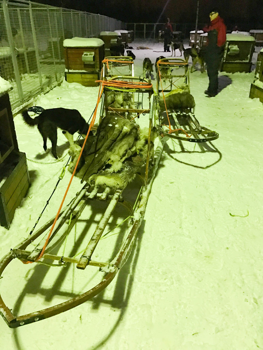 Norway Adventures-dog_sleds.jpg