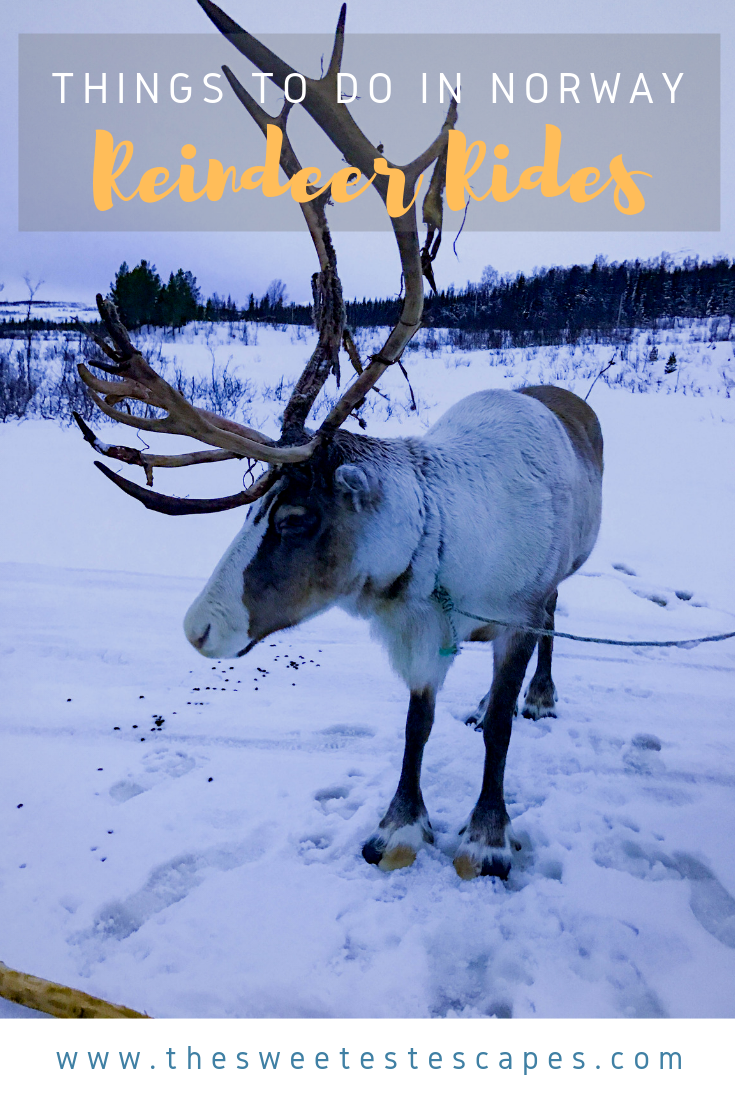 Things to do in Norway: Reindeer Rides — The Sweetest Escapes