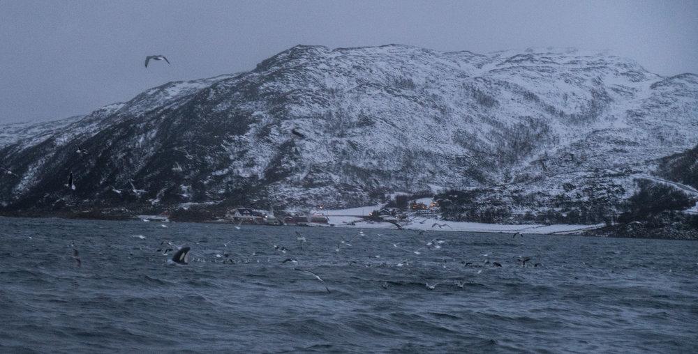 Norway_Whale_Watching.jpg