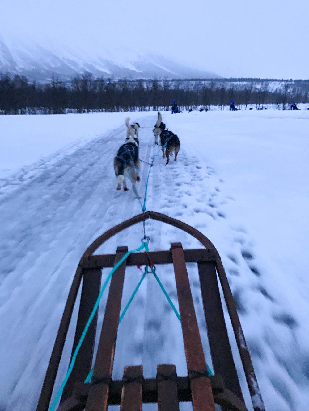 Husky Dog Sledding in Norway