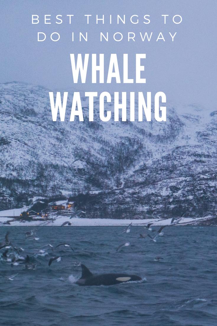 Whale Watching in Tromsø, Norway.png