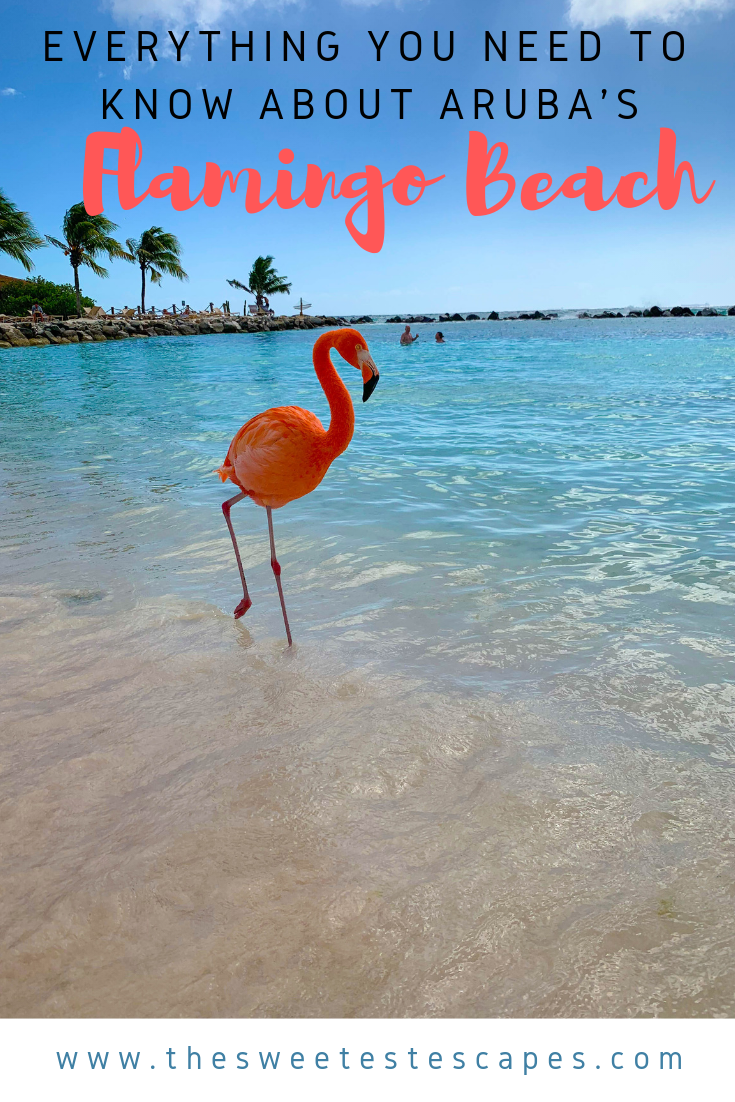 Everything you need to know about Renaissance Aruba Flamingoes Beach.png