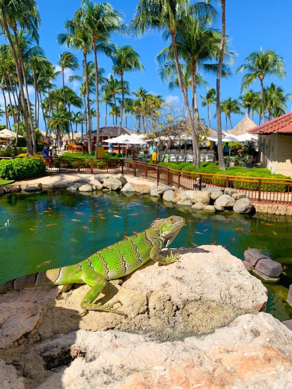 Hyatt Regency Aruba Resort Animals
