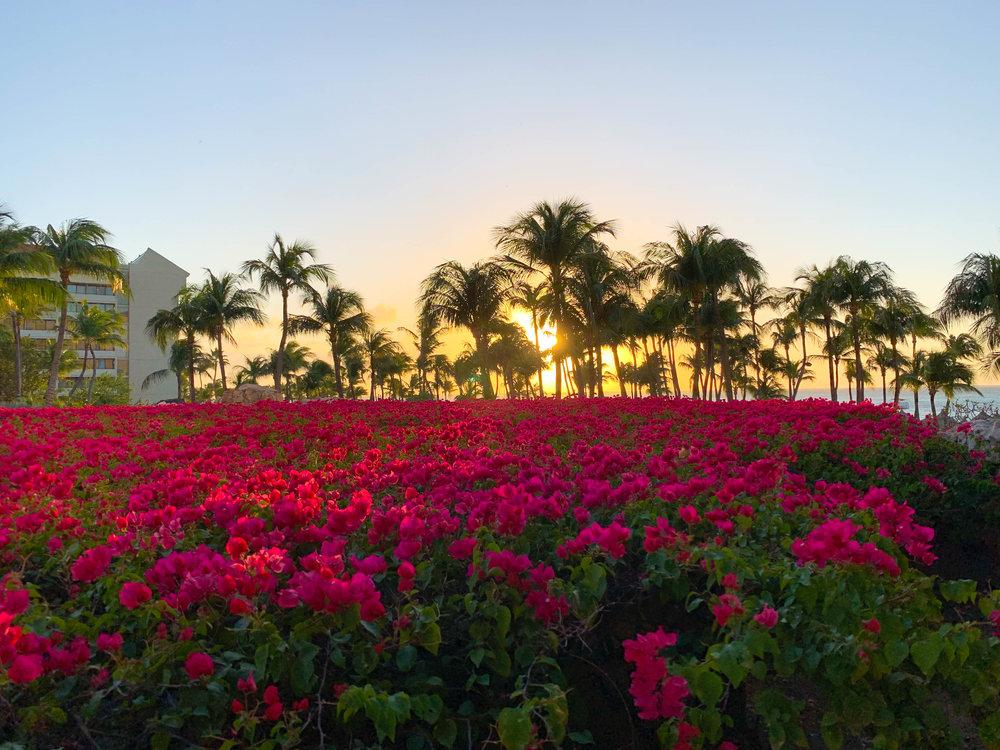 Aruba-Hyatt-Regency-38.jpg