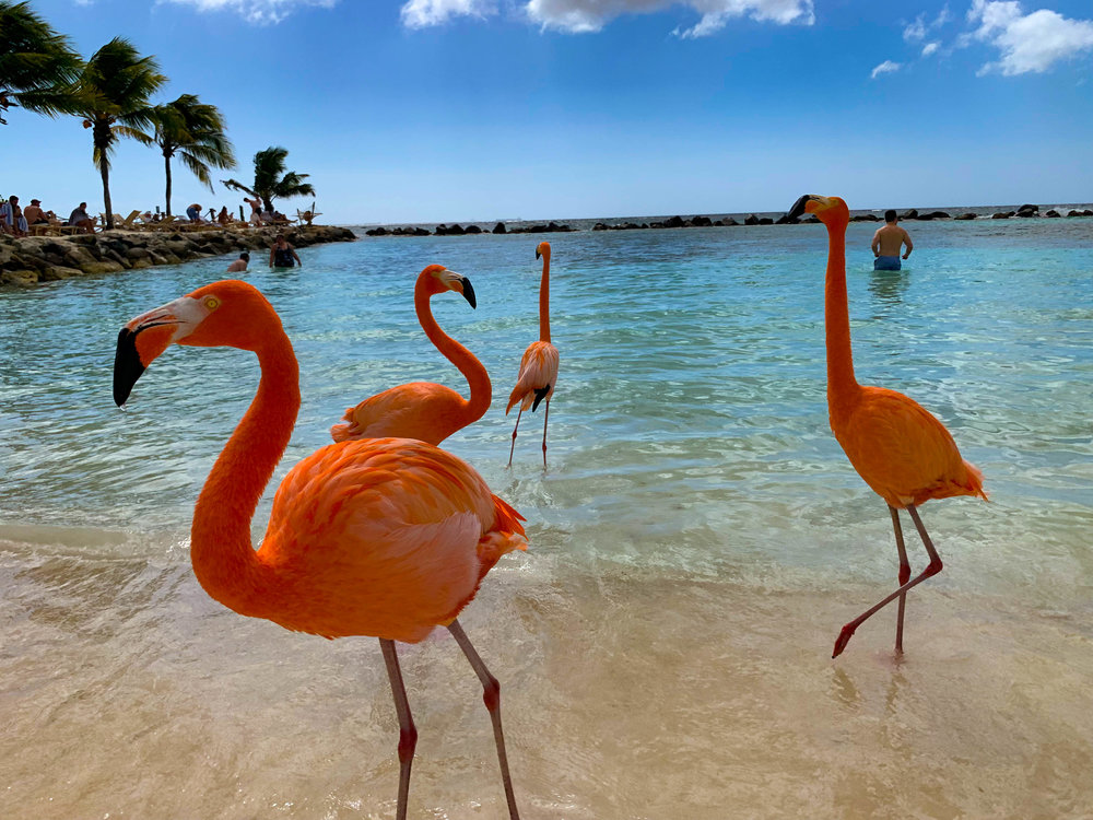Aruba - Read all about how we went to Flamingo Beach and where we stayed!