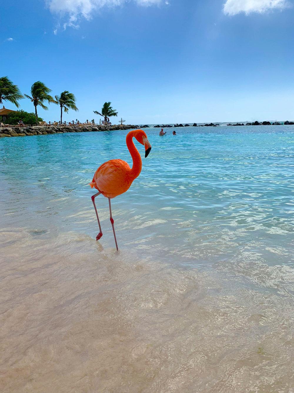 Flamingo Beach - Renaissance Island